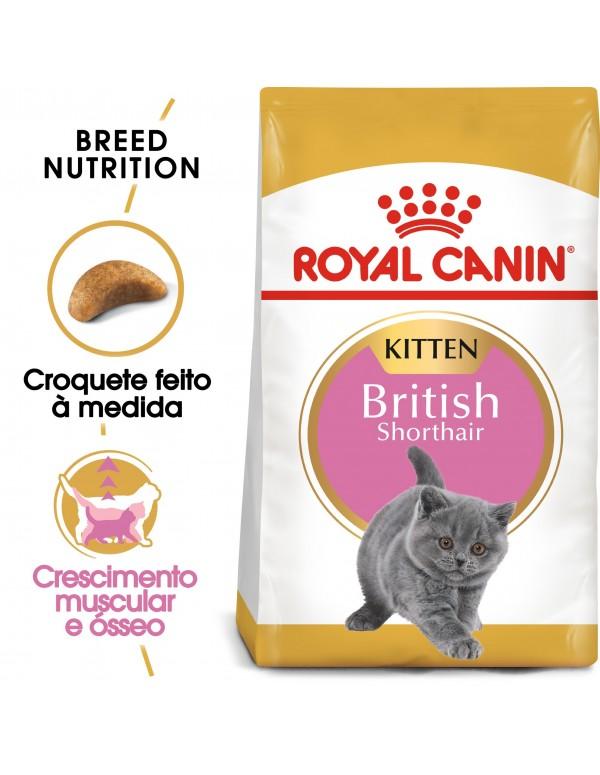 Royal Canin Gato Feline Beed Nutrition Kitten British Shorthair Alimento Seco Gato