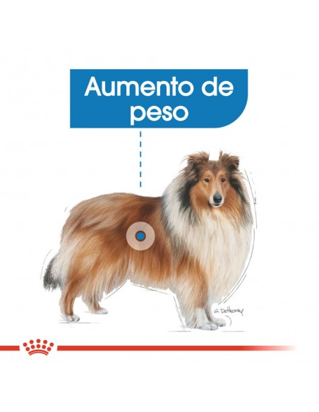Royal Canin SHN Maxi Light Weight Care Alimento Seco Cão