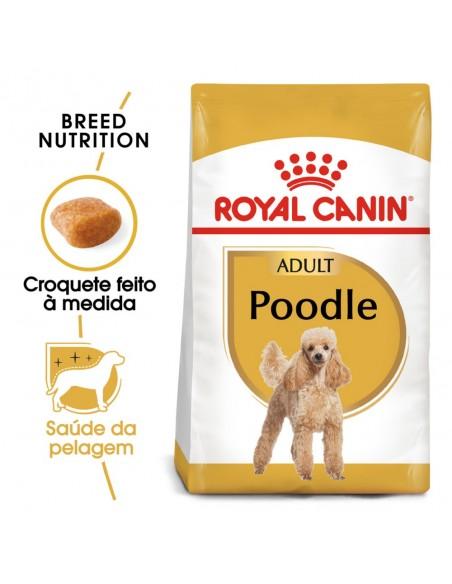 Royal Canin BHN Poodle Adult Alimento Seco Cão