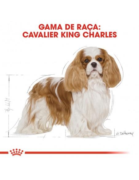 Royal Canin BHN Cavalier King Charles Adult Alimento Seco Cão