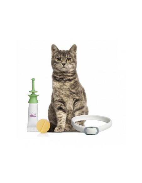 Desparasitantes para Gatos
