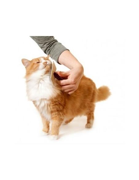 Higiene e beleza para gatos